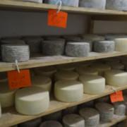 106il צילום: גבינות ברקנית
