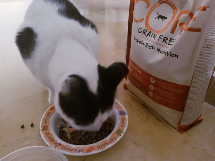 חתולים נהנים מCore Wellness