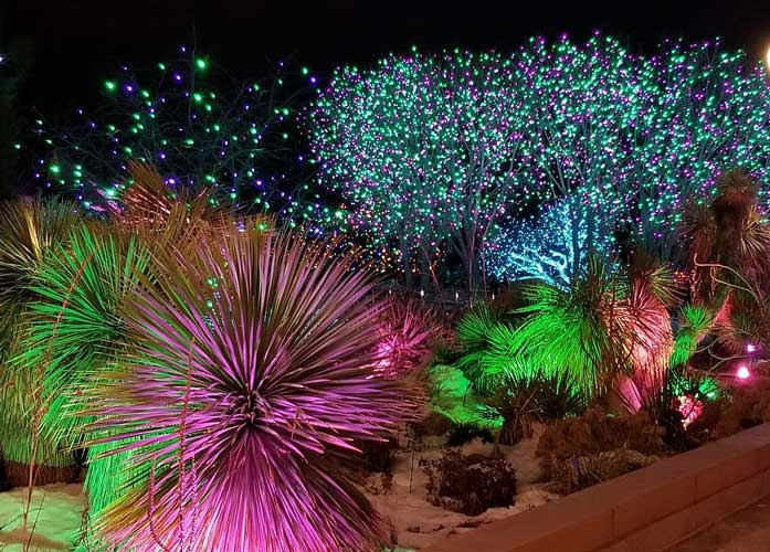 תיירות חורף 2020 בגן הבוטני צילום: סוניה-פרנזל